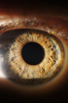 The #human #eye. By #optiek Van der Linden #Zele #Belgium.  http://www.optiekvanderlinden.be