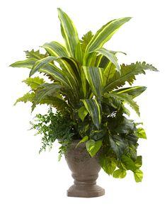 Mixed Yucca, Marginatum, Pothos and Bracken Desk Top Plant in Planter