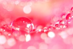水分 水滴 花びら 植物 花 薔薇 バラ