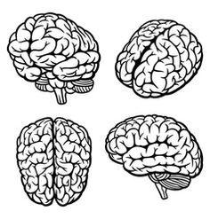 Illustration about Human Brain. Illustration of idea, background, smart - 27567444 Brain Anatomy, Anatomy Art, Brain Vector, Human Vector, Brain Tattoo, Brain Illustration, Brain Art, Grafik Design, Art Reference