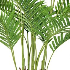 Laura Ashley Palm Tree in Planter Topiary Trees, Potted Trees, Palm Trees, Artificial Boxwood, Artificial Tree, Stone Plant, Fake Plants Decor, Floor Plants, Palm Plant