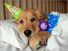 It was my Birthday today, do you like my new teddy I got as a present?
