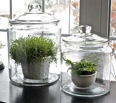 Kind of like a terrarium, but the plant is in a pot. Nice clean look.  The Yellow Cape Cod: DIY Projects