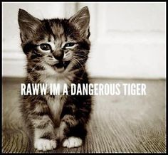 Rawwr, Tiger Kitty! | Just4MyPet.com