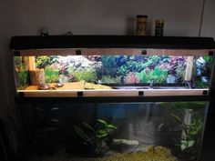 my 55 gallon eastern painted turtle set up with homemade turtle topper - Indoor Setups.Aquariums and Tubs - Turtle Times Forums Turtle Enclosure, Tortoise Enclosure, Tortoise Cage, Baby Tortoise, Turtle Time, Turtle Pond, Turtle Setup, Box Turtle Habitat, Homemade Turtles