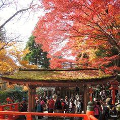 Kurama-dera Temple, Kyoto / 鞍馬寺(京都市)