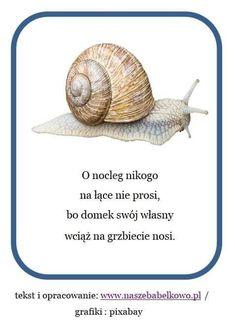 Snail, All In One, Kindergarten, Marketing, Education, Children, Animals, Inspiration, Speech Language Therapy