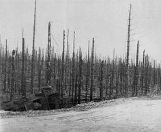 Aftermath of Huertgen Forest Battle - January 16, 1945