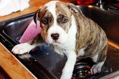 Bottle pup gets a bath