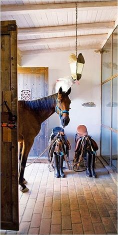 stable #horses