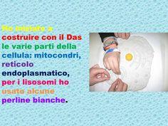 COSTRUZIONE DELLA CELLULA - ppt video online scaricare Cellulite, Video, Montessori, Education, Onderwijs, Learning