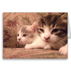 Sibling Kitties Greeting Cards! #cute #kitten #zazzle #store #cat #meow #customize #gift #present http://www.zazzle.com/conquestkitty*