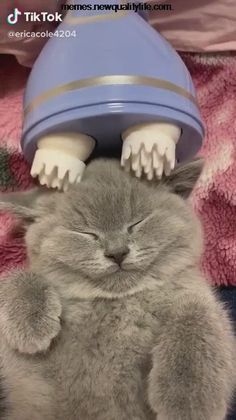 She looks so happy - - She looks so happy Funny Animal Videos # Katzen Katzen Cute Little Animals, Cute Funny Animals, Funny Cute, Cute Cats, Cute Animal Humor, Humorous Animals, Adorable Kittens, Funny Animal Memes, Funny Animal Pictures