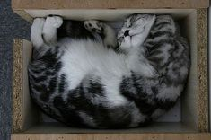 The Art of Sleeping in a Box