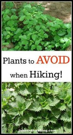 Unfortunately, there are a lot of plants to avoid when you go hiking. Here are the main ones that you need to keep an eye out for when you are out exploring the Rocky Mountains with your family. Hiking With Kids, Hiking Tips, Camping And Hiking, Hiking Gear, Hiking Backpack, Camping Hacks, Outdoor Camping, Camping Life, Hiking Checklist