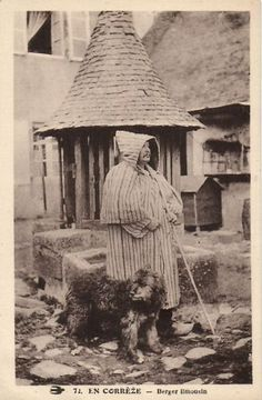 France postcards In Correze Shepherd Limousin and dog