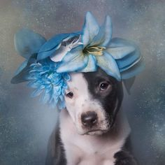 'Pit Bull Flower Power' Already Found Homes For 140+ Pits (New Pics) #pitbull
