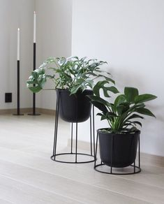 The Menu Wire Plant Pots and Stands are perfect for your indoor plants, available in our Summer Sale 💫 . Beautiful image by @tillasvei with… Green Plants, Potted Plants, Indoor Plants, Plant Pots, Summer Sale, Beautiful Images, Landscape Design, Planters, Menu