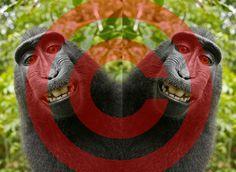 Los monos no cobran derechos de autor