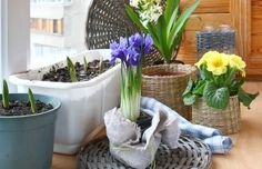 Spaţiul tău de relaxare – grădina din balcon