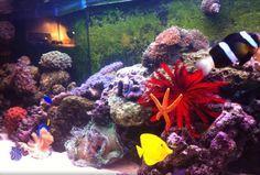 Il nostro aquario...oggi come ieri...amanti del mare e delle creature magiche che lo abitano