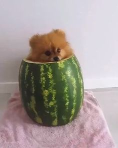 Pin by Colin Reid on animals [Video] Cute Little Animals, Cute Funny Animals, Funny Dogs, Happy Animals, Animals And Pets, Sweet Dogs, Cute Dogs And Puppies, Cute Animals Puppies, Doggies