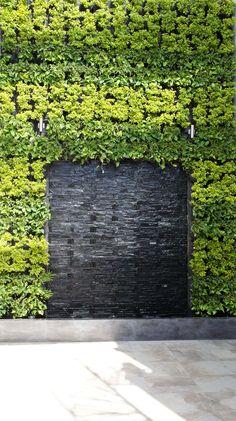 Vallejo Vertical Garden | Cara de Planta