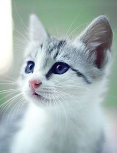 ❤️️️Cutest #Cats and #Kittens