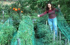 """Protéger ses récoltes au potager bio Étourneaux, chenilles, limaces, coups de soleil… de nombreuses menaces planent sur vos cueillettes au potager. Rustica vous donne les """"trucs"""" des jardiniers pour les combattre."""