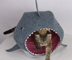 shark cat bed...yes, please!