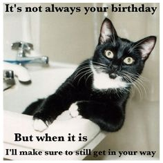 This is not my picture but I made the caption, seemed fitting since its my birthday :-)  funny birthday cat