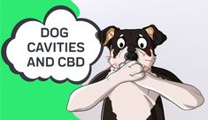 Posted by How to Address Doggy Cavities and How CBD Can Support — Medical Questions, Medical Advice, Dental Health, Dental Care, Dog Teeth, Cavities, Pet Food, Canning, Pets