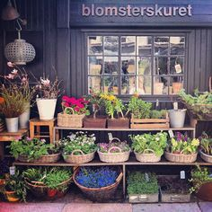 Flower market beneath my flat in Copenhagen (Follow along with me and my family on Instagram as we spend the next six weeks in here! (@justinablakeney)