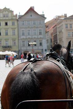 Prague, view form the carriage