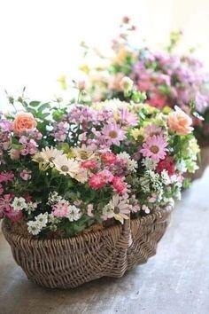 Basket Flower Arrangements, Beautiful Flower Arrangements, My Flower, Fresh Flowers, Flower Art, Flower Power, Floral Arrangements, Beautiful Flowers, Flower Baskets