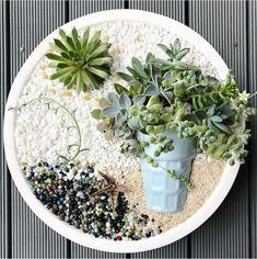 Succulent Garden Diy, Succulent Pots, Miniature Garden, Planting Succulents, Mini Garden, Succulent Gardening, Succulent Planter, Succulents, Healthy Garden