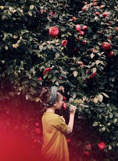Luna Magazine - this reminds me of my childhood at my uncle & aunts place. Camellia tree