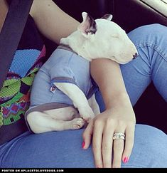 Adorable Bull Terrier Puppy - A Place to Love Dogs