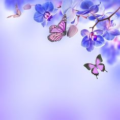 Fototapeta Pixerstick Kwiatów tle z tropikalnych storczyków i motyl 365 dni na zwrot ✓ Miliony wzorów ✓ 100% ekologiczny druk ✓ Profesjonalna obsługa i doradztwo ✓ Skonfiguruj online!