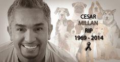 """ProcesoMX: Muere el famoso """"Encantador de Perros"""", Cesar Millán"""