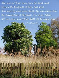 1 Corinthians 15:20-22