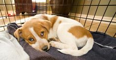 House Training Your Puppy with a Crate