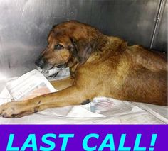 INJURED and in URGENT NEED OF RESCUE!! UNABLE TO WALK!!!! BRUCE-A1701232 — Miami Dade County Animal Services. https://www.facebook.com/urgentdogsofmiami/photos_stream