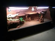 Digging this!* for bearded dragon