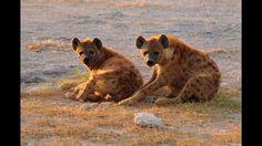 Demo reel african safari