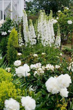 White Flower Gardens