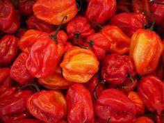 #capsicum chinense #capsicum peppers #chili #habaneros #hot #peppers #red #spices #spicy