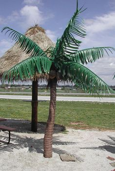 a 6' palm tree great for entertaining areas and outdoor patios. www.xtremelytropical.com