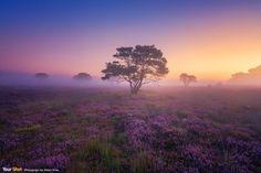 紫色天堂 八月的荷兰成了紫色梦游仙境。尤其是晨雾带来的迷濛感,当下整体气氛实在太棒了!
