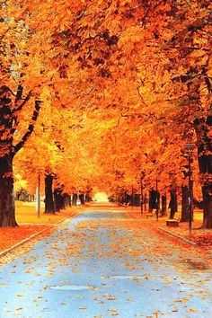 The Color of Autumn (by Michael Azucena)